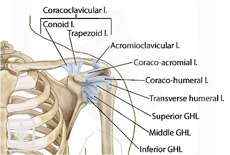 Shoulder Ligaments | ShoulderDoc by Prof. Lennard Funk