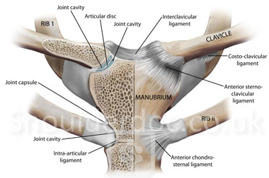 Sternoclavicular Joint | ShoulderDoc by Prof. Lennard Funk